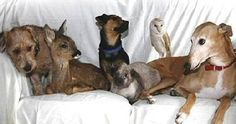 True  Story In  2003, police in Warwickshire , England , opened a  garden shed and found a whimpering, cowering  dog.  The dog had been locked in the shed and  abandoned.  It was dirty and malnourished, and  had quite clearly been abused. In  an act of kindness, the police took the dog, which was  a female greyhound, to the Nuneaton Warwickshire  Wildlife Sanctuary, which is run by a man named Geoff  Grewcock, and known as a haven for animals abandoned,  orphaned, or otherwise in need…