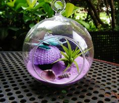Sea Urchin Mushroom Butterly Glass Globe Hanging Terrarium Kit with Tillandsia Air Plant