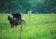 Amish horse and buggy~ Sarah's Country Kitchen ~