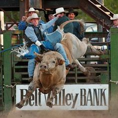 52nd Annual Belt PRCA Rodeo: bull riding in Belt, Montana