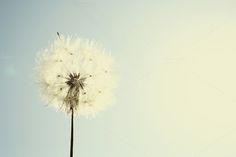 simple dandelion by André Lui Bernardo on Creative Market