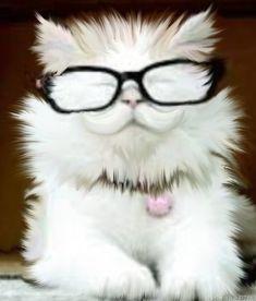 15 Catturd Pics ideas in 2021 | scott baio, sci fi novels, bugsy malone