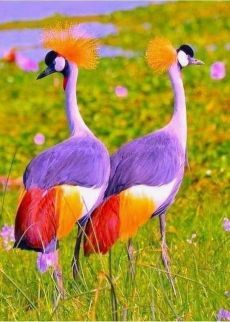 Take a break and go through these 26 cute animals boost your mental focus. These cute animals pictures are so heart touching and feel relaxed everyone. Cute Birds, Pretty Birds, Exotic Birds, Colorful Birds, Exotic Animals, Tropical Birds, Beautiful Creatures, Animals Beautiful, Animals Crossing