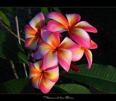 Rare Exotic Flower..