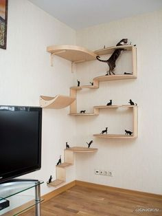 Choosing a Cat Tree, Playground or Kitty Condo… Buying cat furniture can be a confusing and sometimes challenging experience. Nothing is more frustrating than putting up a beautiful cat tree just to get your cats to completely ignore it! Cat Wall Shelves, Small Shelves, Cat Climbing Shelves, Cat Climbing Wall, Diy Cat Tree, Cat Trees, Cat House Diy, Shelf Furniture, Furniture Ideas