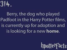 314 Harry Potter Monopoly, Harry Potter Films, Harry Potter Love, Harry Potter Universal, Harry Potter Fandom, Harry Potter World, James Potter, Hp Facts, Movie Facts
