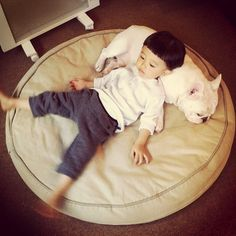 Uses for Frenchies #14: Pillow