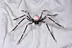 Black and Pink Spider