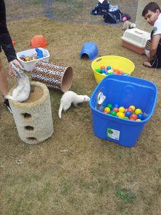 ferret toys | Toys, TOys, TOYS!