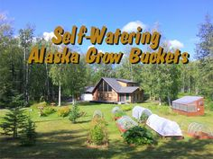 Complete Self-Watering Alaska Grow Bucket Garden System that anyone can use to grow food.