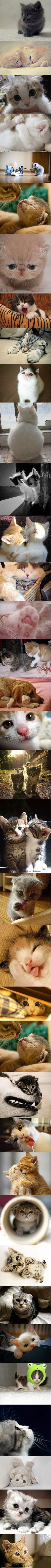 Too many cute kittens - I want them all!