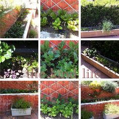 Alicia Silverstone's edible garden, I see I can do just good with less space of what I have now.