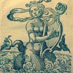 Siren Mermaid, Mermaid Art, Mermaid Paintings, Mermaid Tails, Fantasy Mermaids, Mermaids And Mermen, Real Mermaids, Engraving Illustration, Art And Illustration