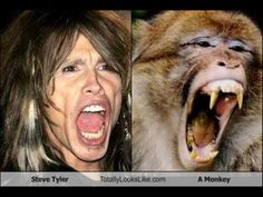 Funny Look Alikes.  This is cute