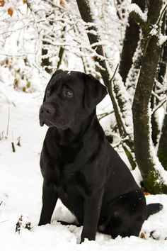 I am bringing my Max to the snow this weekend! *Baby...it's cold outside!!* via @KaufmannsPuppy