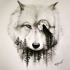 wolf drawing art pencil on Instagram