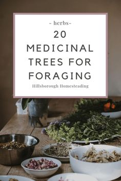20 medicinal trees and how to forage medicine from them
