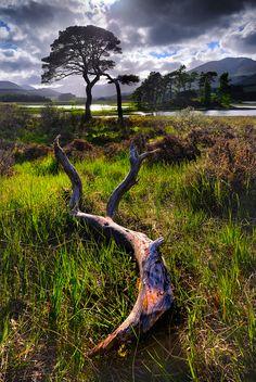 Gnarled branch near Loch Tulla, Argyll & Bute, Scottish Highlands.