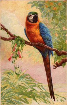 Vintage Russian Postcard - artist Catherine Klein