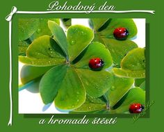 Hezk� den Good Morning, Plant Leaves, Fruit, Plants, Windows, Facebook, Ladybug, Get Well, Buen Dia