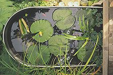 Pond in a Bucket  Create this easy water garden on your deck or patio in a few hours. This pond takes only a few hours to make -- and it can be made out of nearly anything that holds water.