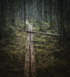 Photo by Jani Ylinampa @janiylinampa #path #rovaniemi #lapland #finland #visitlapland #visitrovaniemi #autumn #forest #trees #woods #nature #divine_forest #forest_captures #luontoonfi #wildernessculture #finditliveit #outdoorfinland #stayandwander #moodygrams #mothernature #treesplease #aov #visualsoflife #neverstopexploring #exploreeverything #finlandlapland #filmlapland #arcticshooting