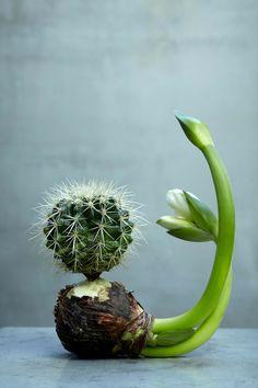 Hermoso cactus