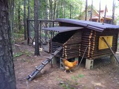 Fox's Log Cabin Chicken Coop      Greetings from the country! We (me, mywife, our 11 year...