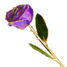 Long Stem Dipped 24K Gold Trim Purple Genuine Rose In Gold Gift Box ** Find out more details by clicking the image (This is an amazon affiliate link. I may earn commission from it)