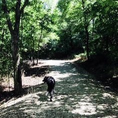 Adventures at Fleming Park Lake Jacomo Dog Training Area - Blue Springs, MO - Angus Off-Leash #dogs #puppies #cutedogs #dogparks #bluesprings #missouri #angusoffleash