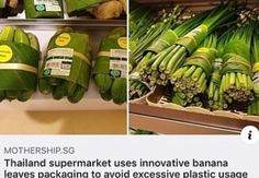 Banana leaves are enormous and they grow super fast (apparently banana plants aren't trees because they re-grow every year? They're huge tho) if they keep well this is a fantastic idea Save Our Earth, Save The Planet, Angst Quotes, Banana Plants, Faith In Humanity Restored, The More You Know, Change The World, Mother Earth, Fun Facts