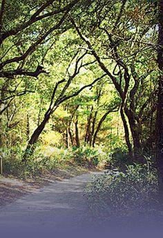 Enjoy nature trails for walking/running/biking in #GulfShores & #OrangeBeach.