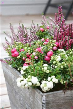 7 Balcony flowers to add a touch of color in a .- Marjakanerva Ja Kalluna 7 Balcony flowers to add a touch of color in autumn! Fall Planters, Outdoor Planters, Garden Planters, Balcony Flowers, Outdoor Flowers, Winter Plants, Winter Garden, Container Plants, Container Gardening