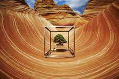 azuma makoto documents a bonsai tree's 10-year journey around the globe