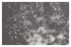 Windscape - Shawna M. Tavsky