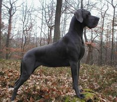 Solid Black Pointer { I love black solids, not so much the