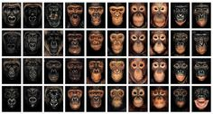 James & Other Apes, by James Mollison