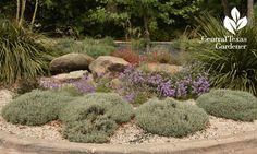 salvia santolina purple verbena front yard garden Central Texas Gardener