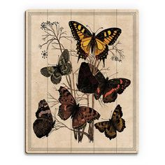 Horizon Butterfly Drawing Wall Art on Wood