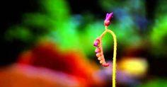 Τα φυτά ανταποκρίνονται στο άγγιγμα!