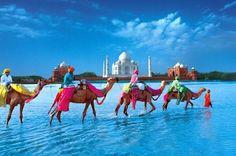 Bucket List: Ride a camel.