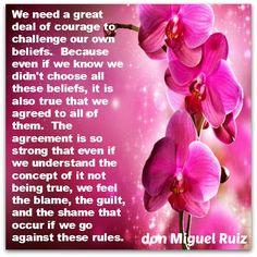 don Miguel Ruiz                                                                                                                                                     More