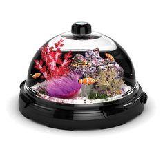 Interesting: The Tabletop Saltwater Aquarium - Hammacher Schlemmer. Saltwater tanks are so temperamental though, I wonder if the sea life will thrive. Hammacher Schlemmer, Gadgets And Gizmos, Cool Gadgets, Tech Gadgets, House Gadgets, Technology Gadgets, Aquascaping, Inspektor Gadget, Nano Cube