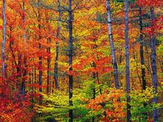Vibrrant forest.  Seen on Pixdaus