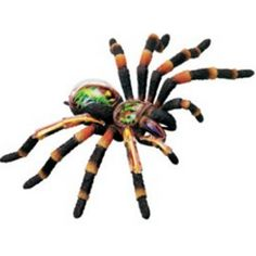 X-Ray Tarantula Spider Anatomy Model