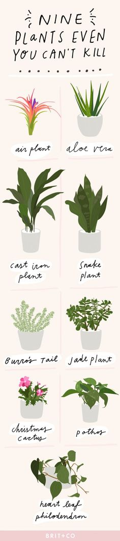 How to save your plants.