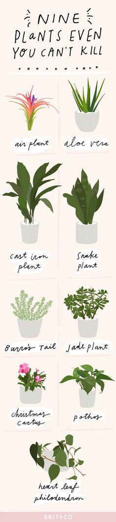 9 House Plants Even *You* Cant Kill via Brit + Co