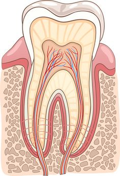 Dental tips and much more at: blog.biolase,com/waterlase