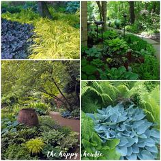 12 Inspiring Images Shade Gardens Gallery images flowering shade plants, images … – Gardening for beginners and gardening ideas tips kids Garden Images, Garden Pictures, Garden Photos, Flowering Shade Plants, Shade Garden Plants, Shade Landscaping, Front Yard Landscaping, Landscape Design, Garden Design