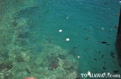 Honolulu Hawaii Attractions | More Honolulu Harbor Photos